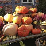 元銀行員が考える「かぼちゃの馬車」不動産投資トラブル